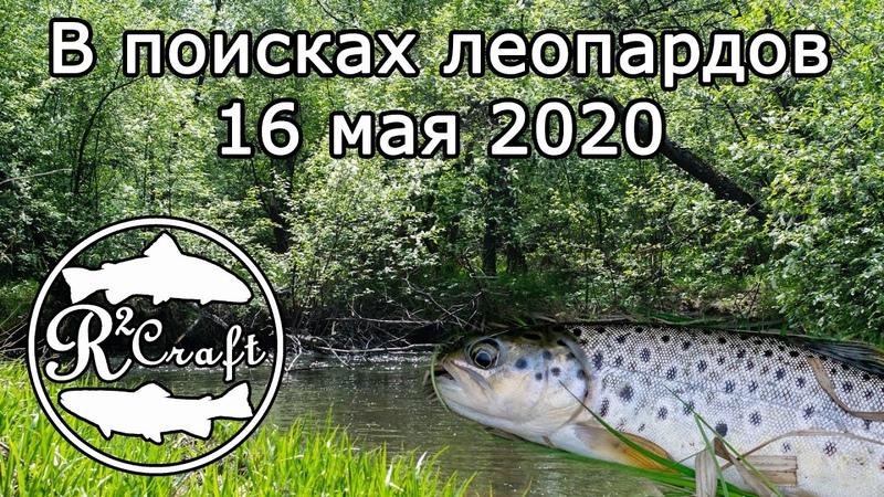 В поисках леопардов 16 мая 2020