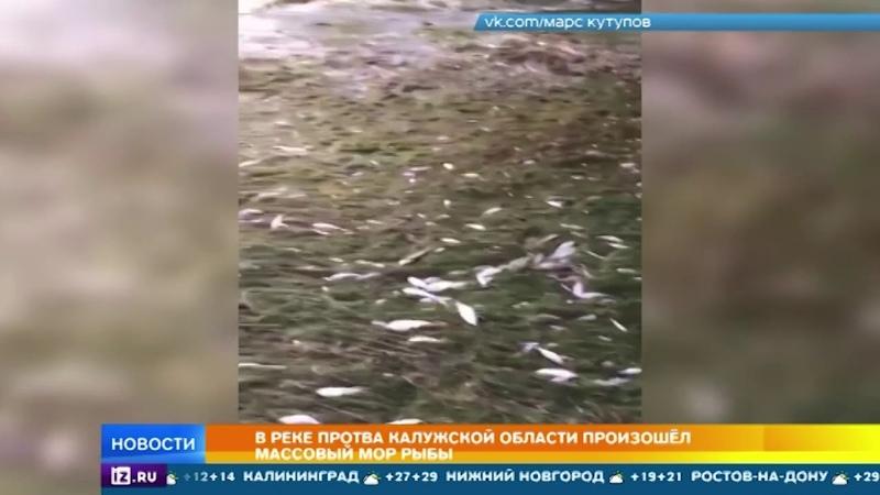В Калужской области берега реки Протва оказались завалены дохлой рыбой