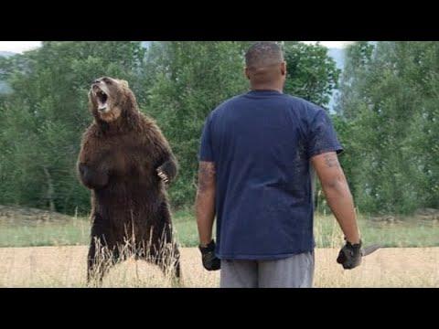 Медведица просила помощи у человеку рискуя жизнью ради спасения своего медвежонка
