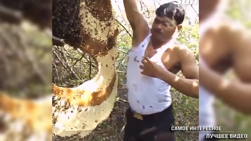 Повелитель пчёл