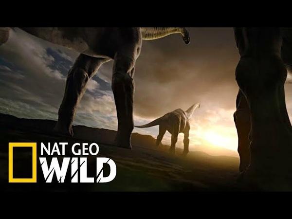 National Geographic HD Сражения динозавров Документальный фильм