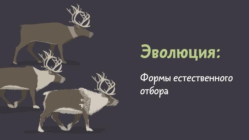 Формы естественного отбора Естествознание 5 4
