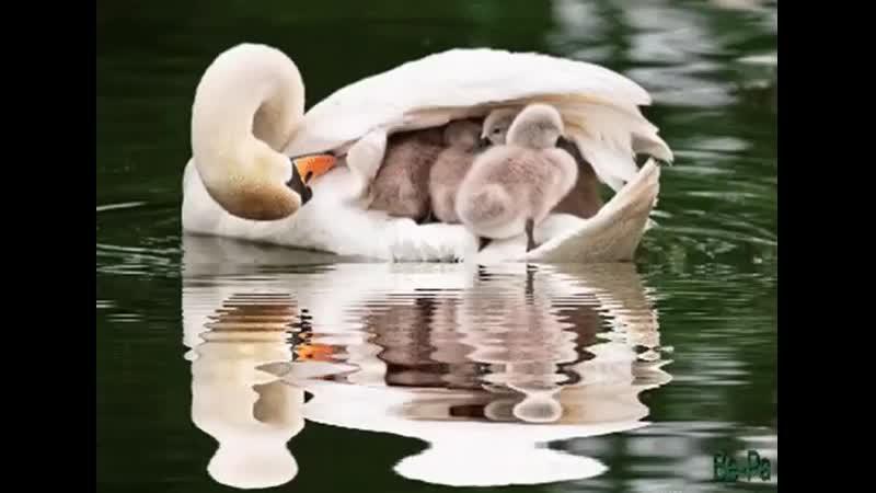 любовь мам бесценна