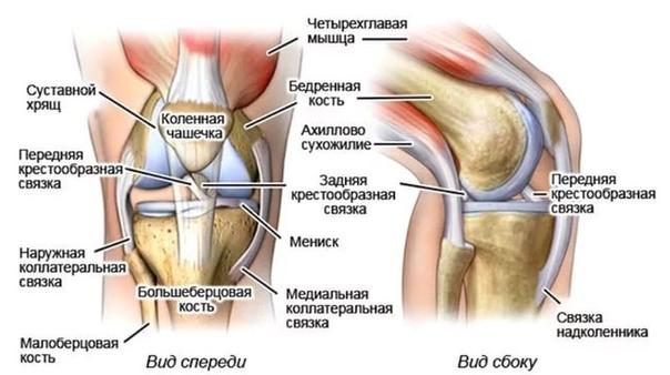 ПРЕПАРАТЫ ДЛЯ СУСТАВОВ И СВЯЗОК Высокие физические нагрузки на связки и суставы приводят к возникновению хронических болей и развитию дистрофических процессов в связках и суставах. Кроме того,