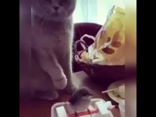 Можно и я поглажу))