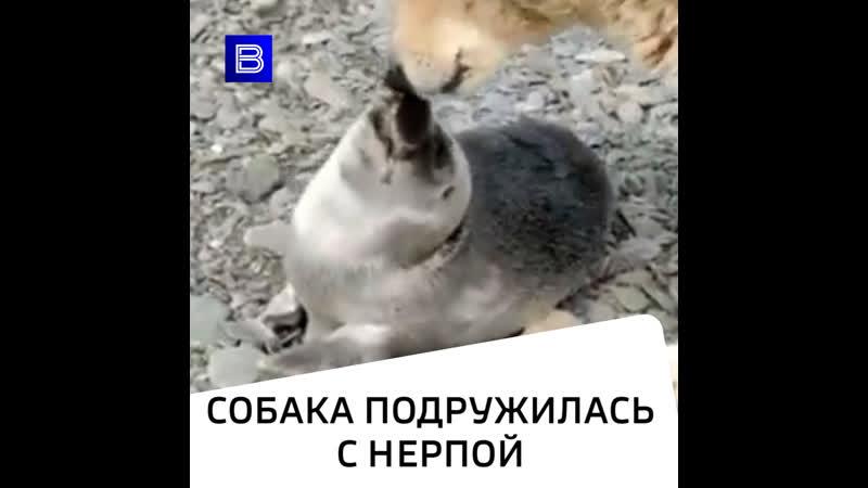 Собака вернула к жизни детеныша нерпы
