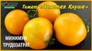 Томат Золотая клуша. Описание, характеристики, отзыв, опыт выращивания. Помидор Золотая клуша