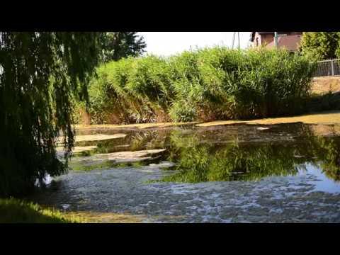 Солнечный окунь играет в реке Кильчень