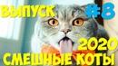 Смешные КОТЫ и кошки 2020 Выпуск 8 приколы про кошек приколы с кошками