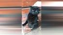 Коте рулят ржачные котики часть 3. коте ржачь смешные