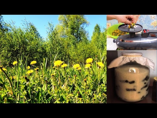 ч 1 Одуванчик желтая 🌻 таблетка для зрения А его мукополисахарид для здоровья печени