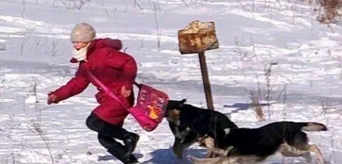 Стая собак напала на российскую школьницу. В камчатском городе Вилючинске бродячие собаки набросились на 11-летнюю школьницу.Инцидент произошел неподалеку от школы и детского сада. На