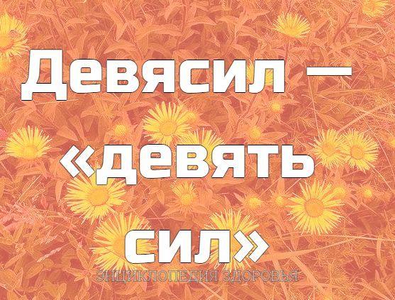 Девясил  «девять сил»