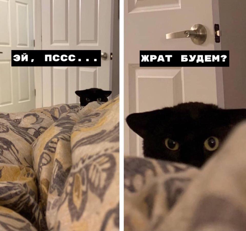 Хорошая идея, котик