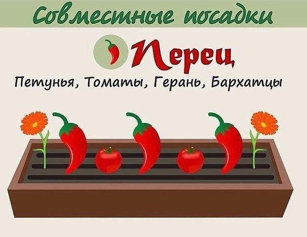 Овощи, которые любят расти вместе!