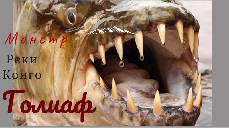 Речной монстр Большая Тигровая рыба Голиаф Big Tiger Fish Goliath