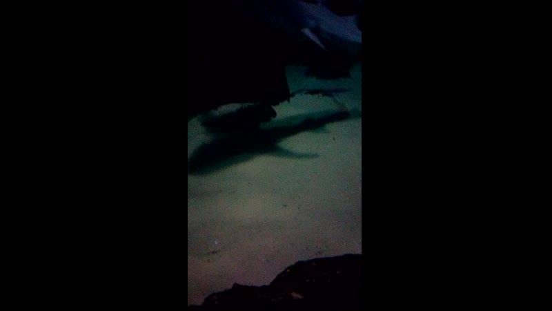 Океанариум, Адлер 2020г