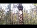 В лес за дровами/Немного о чаге березовый гриб.