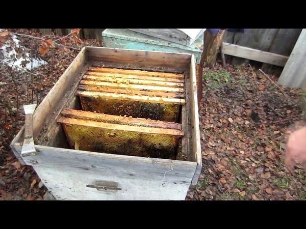 🔥🔥🔥ОДИН ИЗ СПОСОБОВ ИСПРАВЛЕНИЯ СЕМЬИ С МАТКОЙ ТРУТОВКОЙ от А до Я ДЛЯ НАЧИНАЮЩИХ Beekeeping 🔥🔥🔥