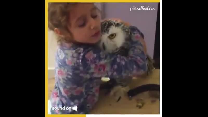 маленькая девочка любит эту снежную сову