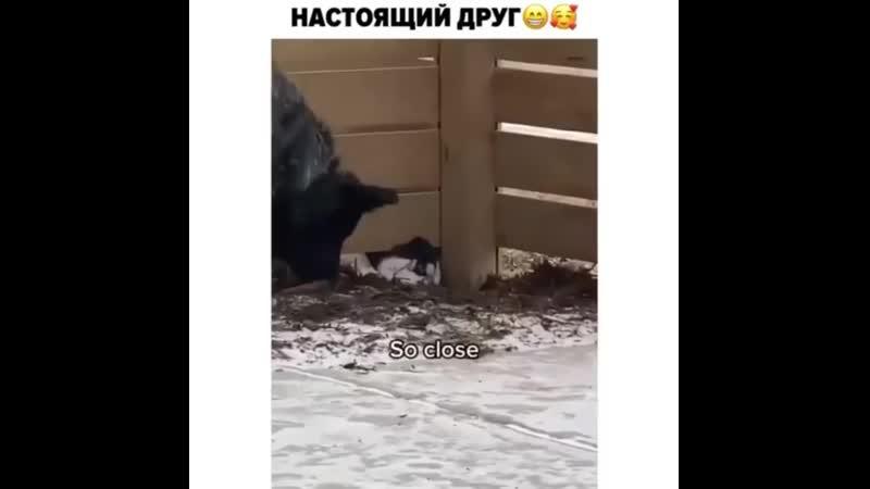 Когда не пустили в гости