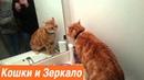 Кошки и зеркало / Приколы с котами / Смешные видео про кошек / Первый раз увидела себя в зеркале