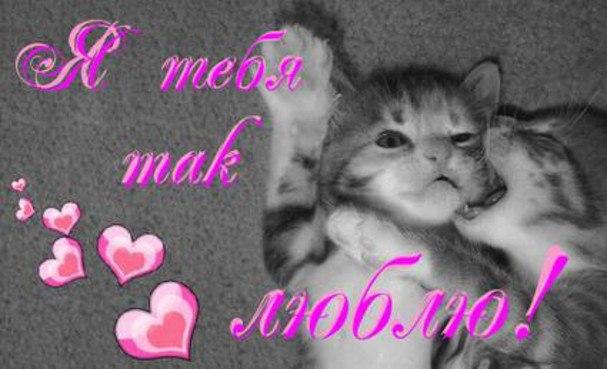 Картинка я так люблю тебя мой котик