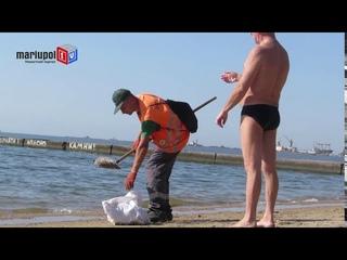 На пляже Мариуполя утилизируют сотни обжигающих прозрачных животных, носителей опасного   книдоцита