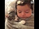 Amistad de Animales y personas , Recopilacion
