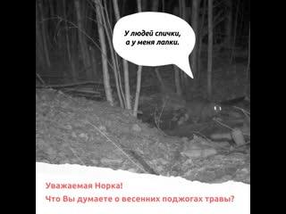 Открытый микрофон: животные о весенних поджогах травы