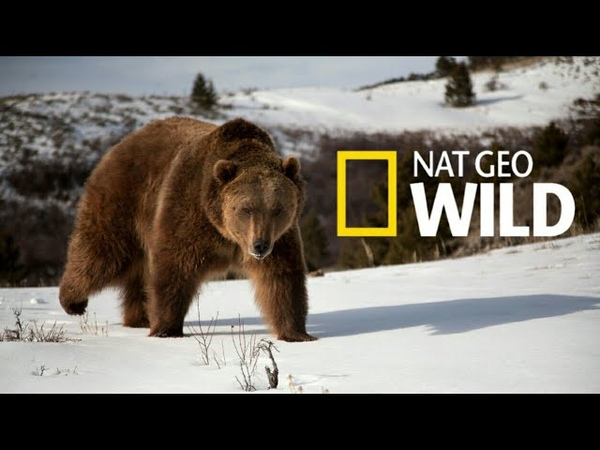 Nat Geo Wild Дикая природа России Wildlife in Russia National Geographic 4K Ultra HD