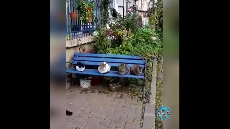 Кошечки сплетницы