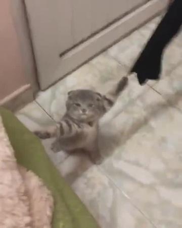 "Cat is holding together""離すんだバナージ、機体が裂けちまう · coub, коуб"