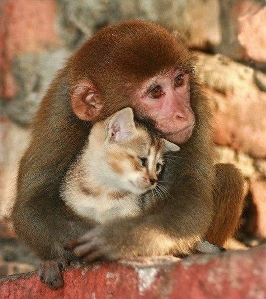 У кoгo есть кот, тот может не бояться одиночества.