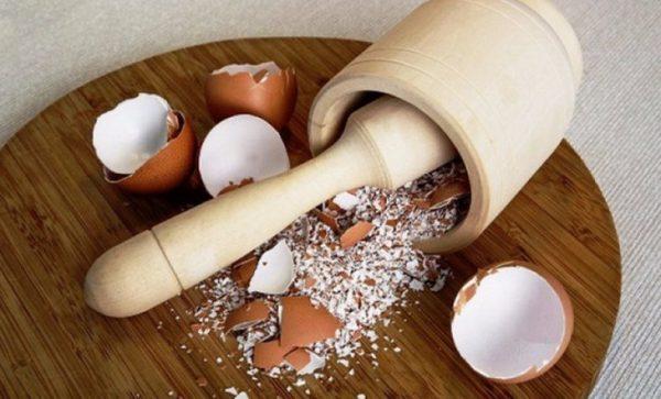 Как правильно использовать яичную скорлупу в виде удобрений