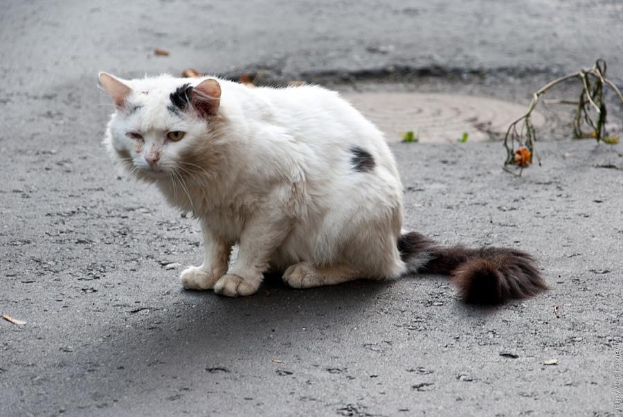 Хочешь, чтобы у всех бездомных кошек был дом? Ставь лайк!