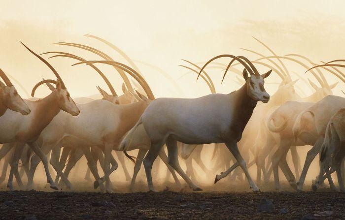 10 вымирающих животных, которых я успел заснять на фото.