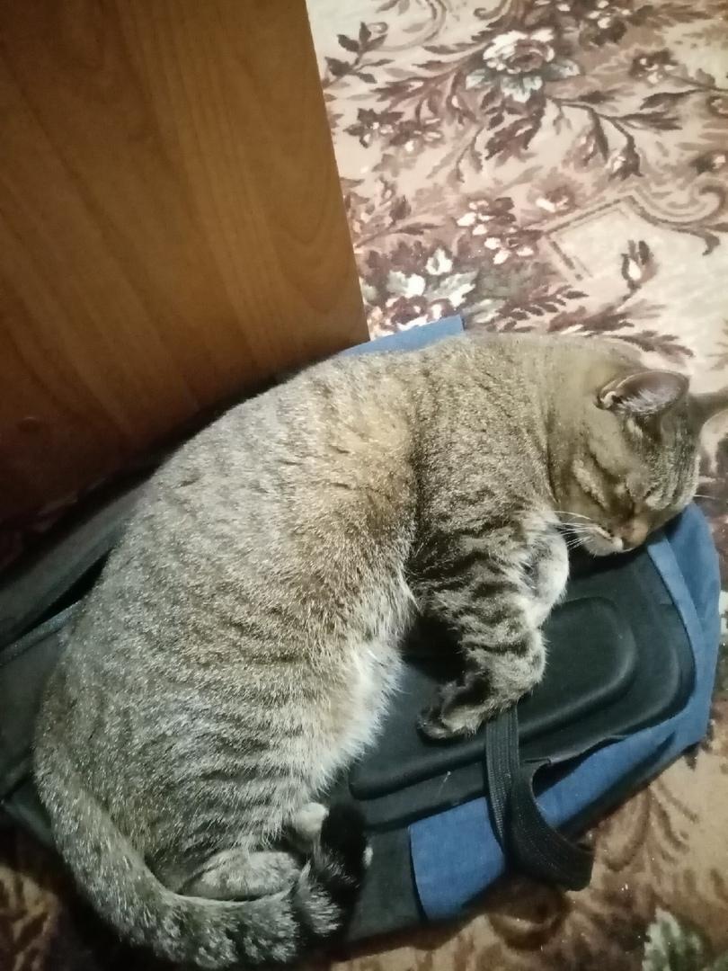А ваша кошка храпит во сне?