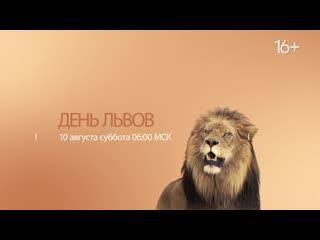 День львов | National Geographic WILD
