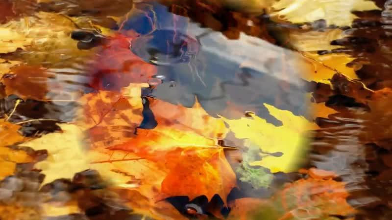 Осень-моя жар-птица ...