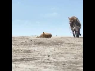 """Тимон и Пумба нашли малыша Симбу в пустыне  """"Король лев"""""""