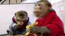 Барнаульские защитники животных требуют закрыть передвижной контакный зоопарк изПетербурга. Новости. Первый канал