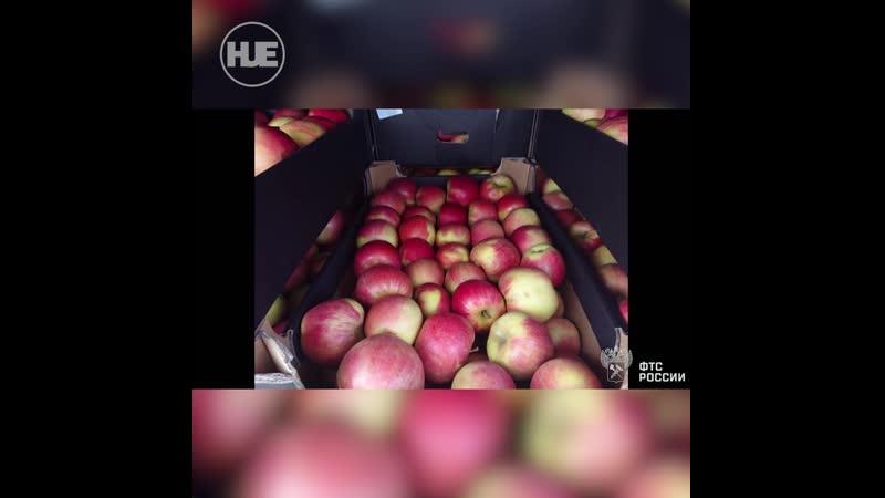80 тонн санкционных яблок из Польши ждёт уничтожение