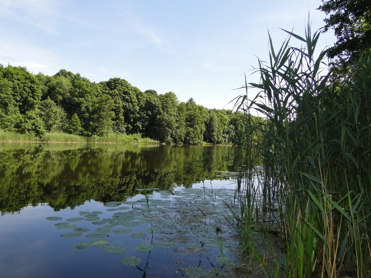Курская область заняла 7-е место в экологическом рейтинге регионов