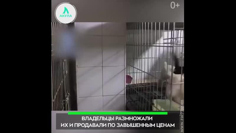 Спасение собак | АКУЛА