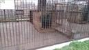 Проблема животных в зоопарках