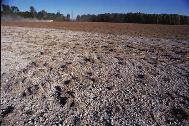 Кислая почва: определение и методы борьбы.. Кислая почва наименее предпочтительна для выращивания культурных растений. Показатель кислотности обусловлен количеством ионов водорода. Как
