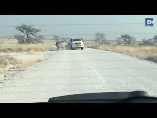 Носорог напал на туристов..