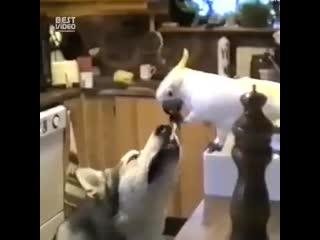 Иногда животные, намного человечнее самих людей byjulf bdjnyst, yfvyjuj xtkjdtxytt cfvb