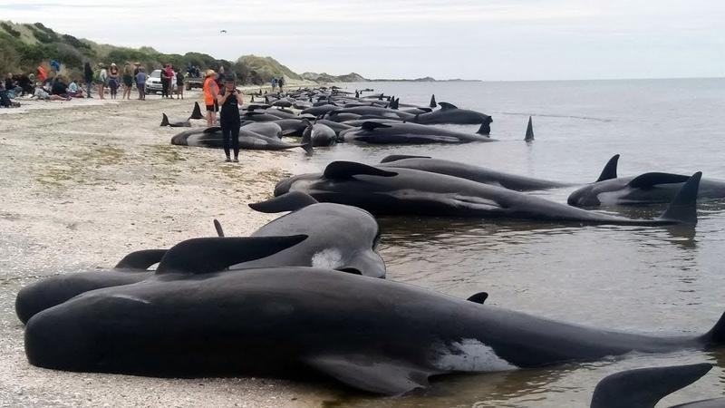 نفوق مئات الحيتان بسبب الحصبة والتلوث يصل 1